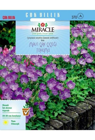 Miracle Tohum Miracle Blue King Mavi Çan Çiçeği Tohumu(1000 Tohum)