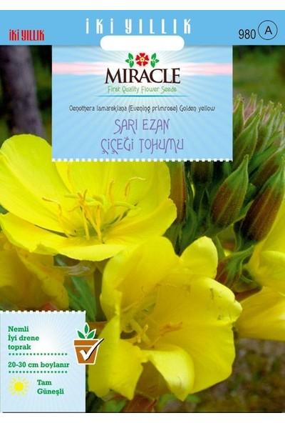 Miracle Tohum Miracle Ezan Çiçeği Tohumu(480 tohum)