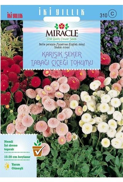 Miracle Tohum Miracle Karışık Şeker Tabağı(Çayır Papatyası) Çiçeği Tohumu(600 tohum)