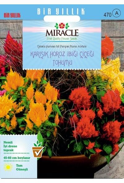 Miracle Tohum Miracle Karışık Renkli Horoz İbiği Çiçeği Tohumu (800 Tohum)