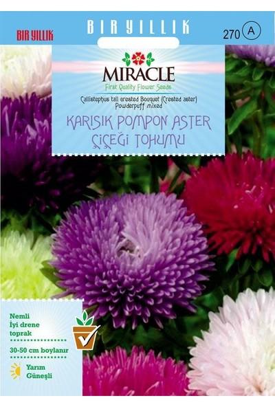 Miracle Tohum Miracle Karışık Pompon Aster Papatya Çiçeği Tohumu (360 tohum)