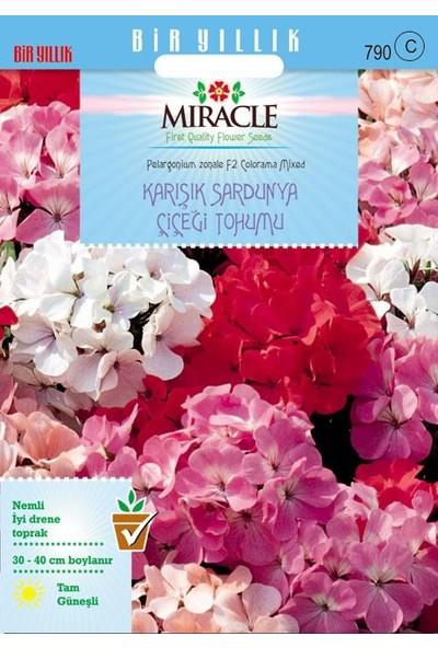 Miracle Tohum Miracle Colorama Karışık Renkli Hibrit Sardunya Çiçeği Tohumu (24 tohum)