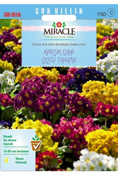 Miracle Tohum Miracle Karışık Renkli Onbir Ay Çuha Çiçeği Tohumu (50 tohum)