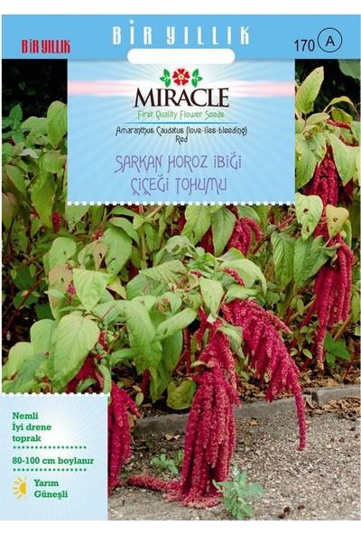 Miracle Tohum Miracle Sarkan Kırmızı Amaranthus(Horoz İbiği) Çiçeği Tohumu( 1500 tohum)