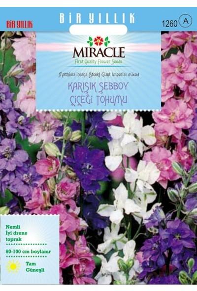 Miracle Tohum Miracle Karışık Renkli İmperial Giant Şebboy Çiçeği Tohumu (360 tohum)