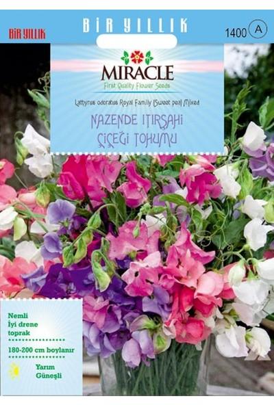 Miracle Tohum Miracle Karışık Renkli Nazende Itırşahi Çiçeği Tohumu (24 tohum)
