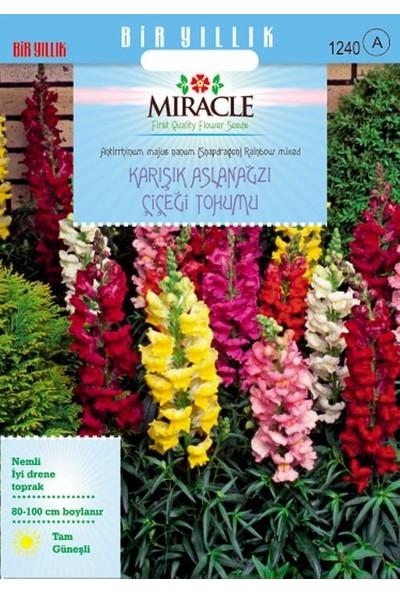 Miracle Tohum Miracle Antirrhinum Rainbow Mixed Karışık Aslanağzı Çiçeği Tohumu(3000 tohum)
