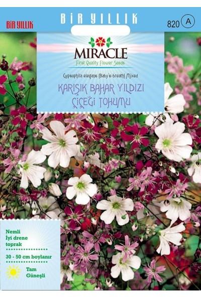 Miracle Tohum Miracle Gypsophila Elegance Mixed Karışık Bahar Yıldızı Çiçeği Tohumu (1100 tohum)