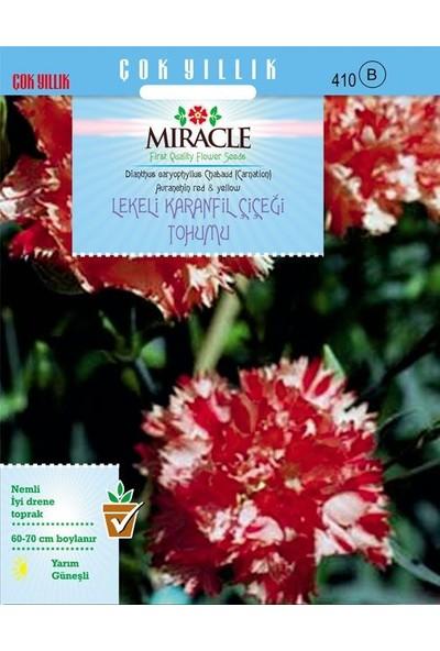 Miracle Tohum Miracle Avranchin Lekeli Karanfil Çiçeği Tohumu (190 tohum)