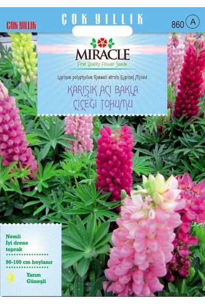 Miracle Tohum Miracle Russell Strain Karışık Renkli Acı Bakla Çiçeği Tohumu(42 tohum)