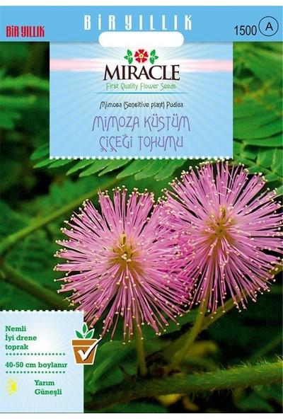 Miracle Tohum Miracle Mimoza Küstüm Çiçeği Tohumu(144 tohum)