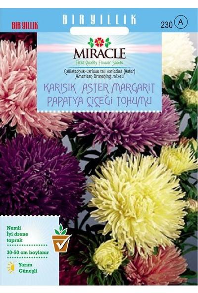 Miracle Tohum Miracle Karışık Renkli Amerikan Branching Aster Margarit Papatya Çiçeği Tohumu (360 tohum)