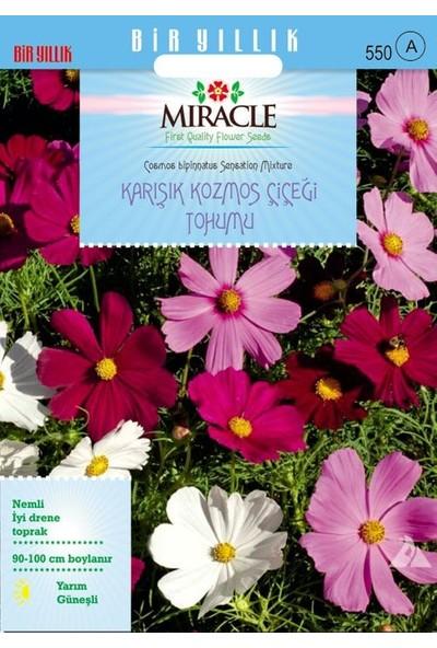 Miracle Tohum Miracle Karışık Renkli Cosmos (Kozmos) Çiçeği (290 tohum)