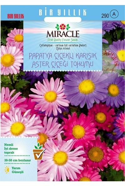 Miracle Tohum Miracle Papatya Çiçekli Karışık Renkli Chinensis Aster Çiçeği Tohumu (360 Tohum)