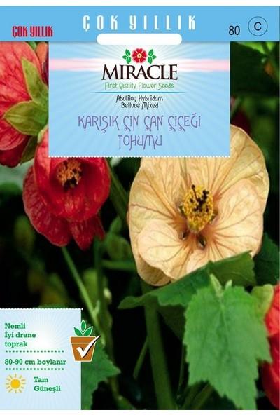 Miracle Tohum Miracle Karışık Renkli Çin Çan Çiçeği Tohumu (50 tohum)