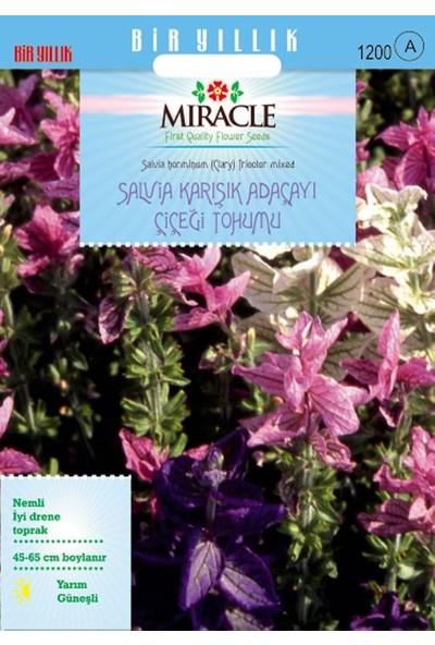 Miracle Tohum Miracle Salvia Horminum Karışık Renkli Adaçayı Çiçeği Tohumu (350 tohum)