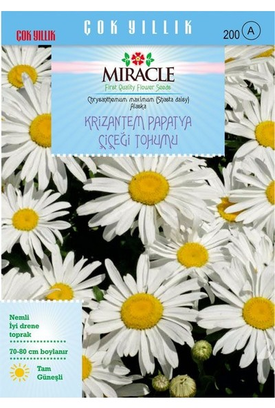 Miracle Tohum Miracle Maximum Alaska Krizantem Papatya Çiçeği Tohumu (300 tohum)