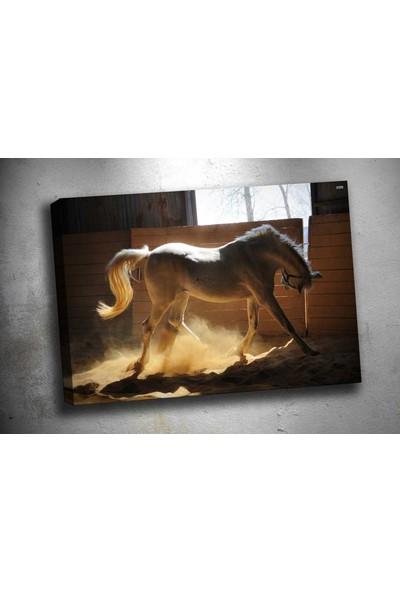 Caddeko Ab97 At Kanvas Tablo 70 x 100 cm