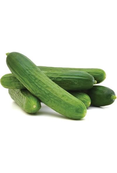 Tazece Hıyar (Salatalık) 1 kg
