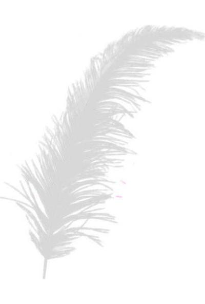 Elite Tüy 100 Adet Süsleme Tüyü Beyaz 12 cm