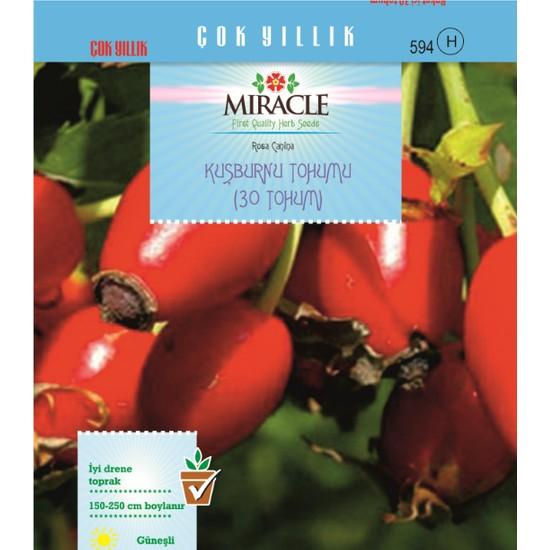 Miracle Tohum Miracle Kuşburnu Tohumu (30 adet)