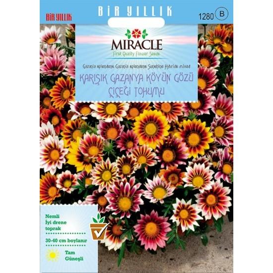 Miracle Tohum Miracle Karışık Renkli Koyun Gözü Gazanya Çiçeği Tohumu(78 tohum)