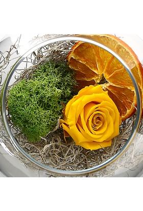 Çanakbahçe Limonata Solmayan gül