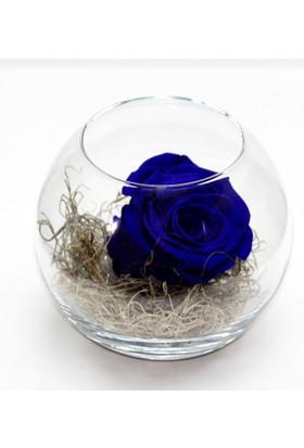Çanakbahçe Mavi Solmayan Gül