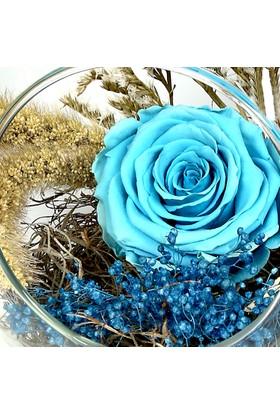 Çanakbahçe Deniz Yıldızı Solmayan Mavi Gül