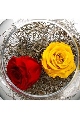 Çanakbahçe Solmayan Gül Sarı Kırmızı