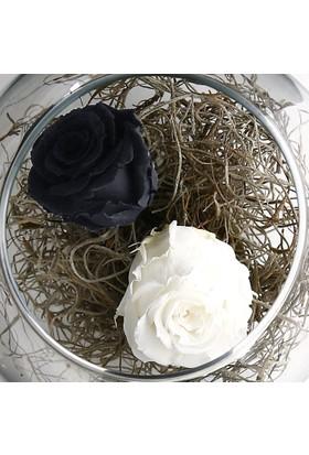 Çanakbahçe Solmayan Gül Siyah Beyaz