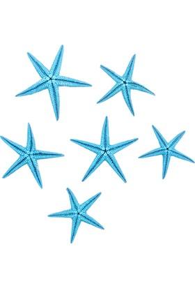 Teraryumal Teraryum Malzemeleri Gerçek Deniz Yıldızı Mavi 6 Adet