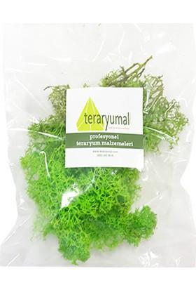 Teraryumal Teraryum Malzemeleri Teraryum Renkli Sphagnum Moss Yosunu Yeşil