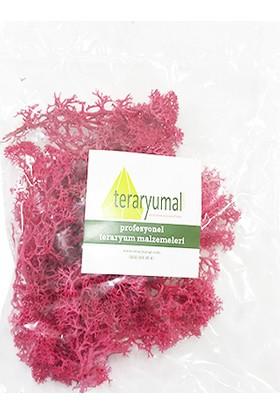 Teraryumal Teraryum Malzemeleri Teraryum Renkli Sphagnum Moss Yosunu Kırmızı