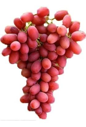 Yalova Fidan Market Üzüm Fidanı Crimson Seedless (Açık Köklü)