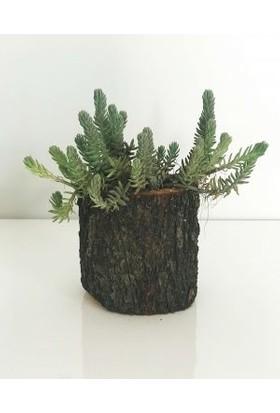 Fidan Burada Mini Kütükte Çiçek - Green One