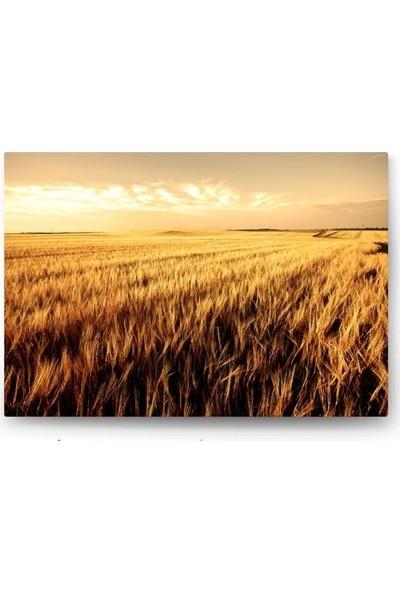 Tablo Kanvas Sarı Buğdaylar Tablo