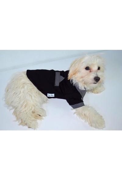 Dogi & Dog Siyah Puantiyeli Polo TShirt Köpek Elbisesi