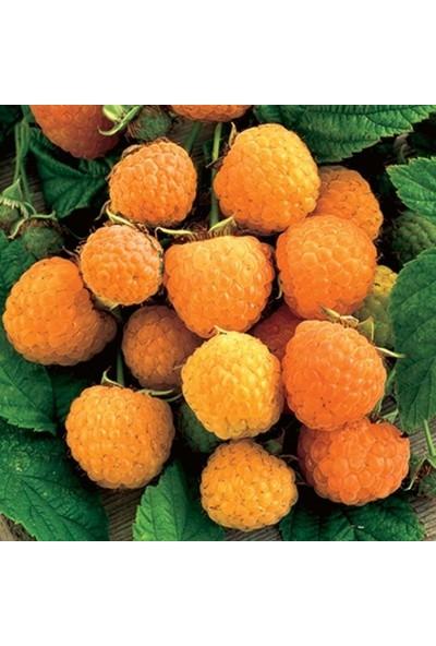 Doğal Sarı Ahududu Tohumu (10 tohum)