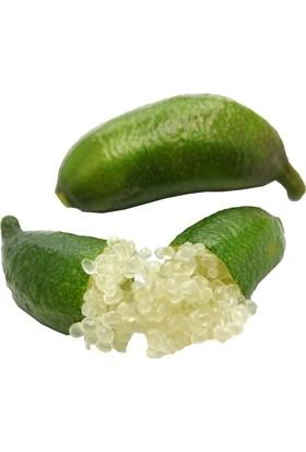 Berke Fidancılık Finger Lime 8 Yaş , Parmak Limon (Sınırlı Tok)