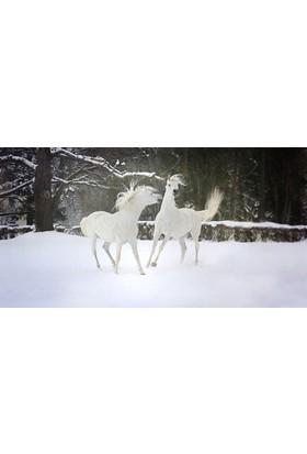 İzya Beyaz Atlar Duvar Kağıdı