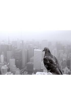 Yaylera Güvercin Şehir Manzarası Temalı Kanvas Tablo 50*70 cm