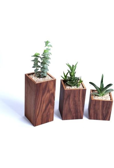 Woodenplus Tribe Ceviz Ağacı Saksı