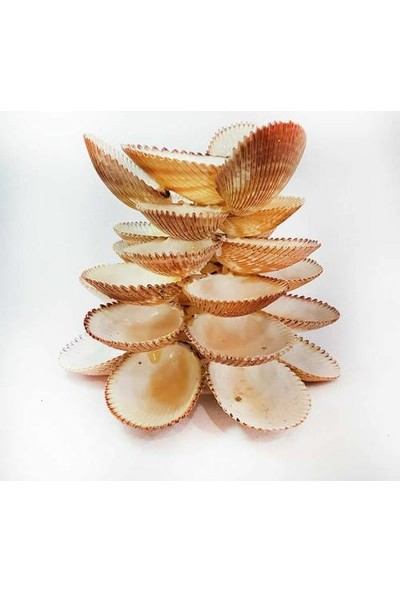 Turkuaz Doğal Brown Cochles Deniz Kabuğu ile Tasarlanmış Mumluk 14 cm * 12 cm