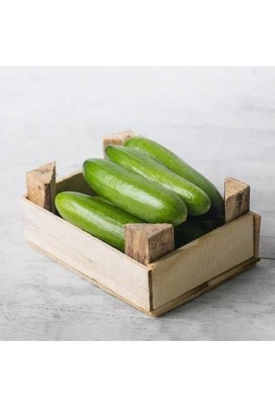 Mutlu Sebzeler Hıyar ( Salatalık ) (1Kg)