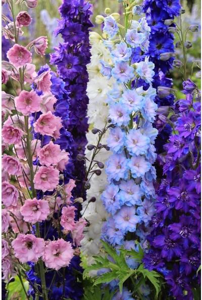 Plantistanbul Hezaren Çiçeği Karışık Renk Çiçek Tohumu +-450 Adet