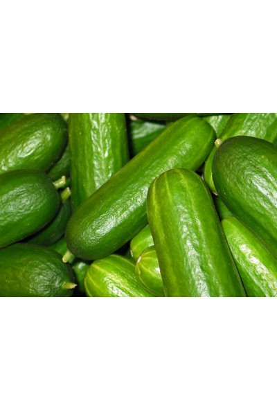 Feymuba Salatalık 3 kg