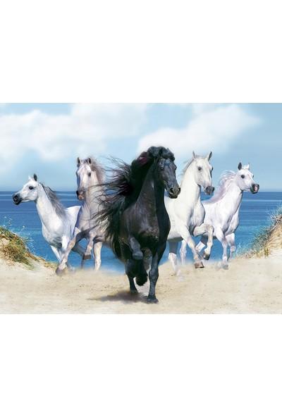 İzya Atlar Duvar Kağıdı