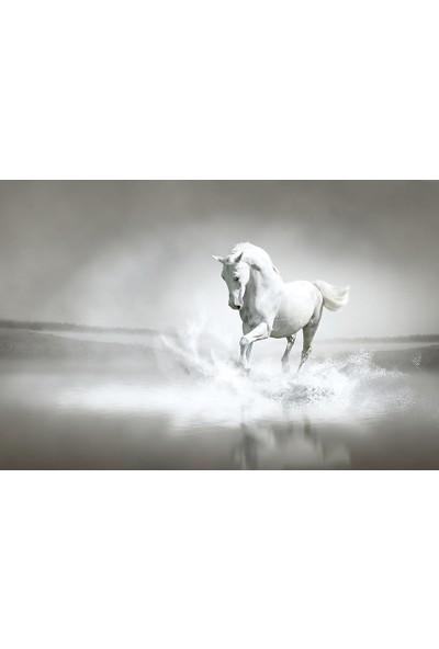 İzya Beyaz At Duvar Kağıdı