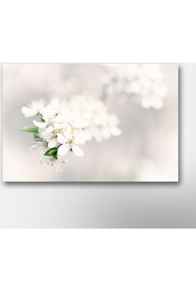 Tek Tablo Beyaz Bahar Çiçekleri Kanvas Tablo